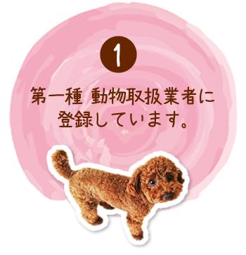 千葉県・ペットシッター・モントブラン、第一種 動物取扱業者に登録しています。