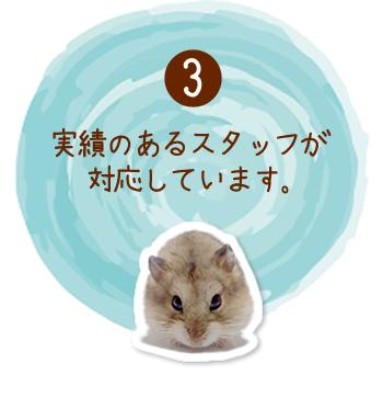 千葉県・千葉市、ペット・トレーニングのモントブランは実績あるスタッフが対応しています。