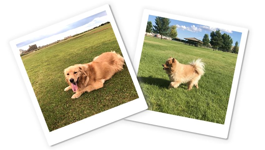 トレーニング料金について(犬、イヌ)