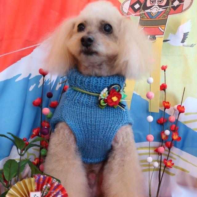 シュー君が来てくれました☺️💕 クリスマスプレゼントのニットお洋服🧶お似合いです😍! 寒がりなシュー君だからこれで冬もこせるかな?😆笑 今年もいっぱいご利用くださってありがとうございました🥰 また来年もよろしくお願いします😊 良いお年をお迎えください❣️✨  #シュー君  #トイプードル  #トリミング  #ハンドメイド  #ニット服  #オリジナル  #dog  #dogstagram  #doglover  #doglife  #montoblan  #今年もありがとうございました  #良いお年をお迎えください🎍