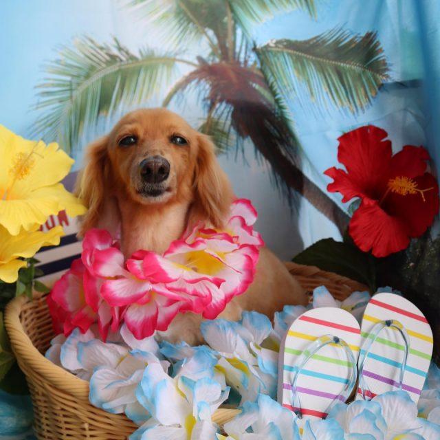 アンちゃんが来てくれました☺️💕 お風呂大好き〜アンちゃん❤️ トリミング終わってもお眠のようで目が閉じちゃってました😂笑 いつもありがとう❣️ また来てね🎵  #アンちゃん  #ミニチュアダックスフンド  #トリミング  #ハーブ風呂  #dog  #dogstagram  #doglife  #doglover  #montoblan